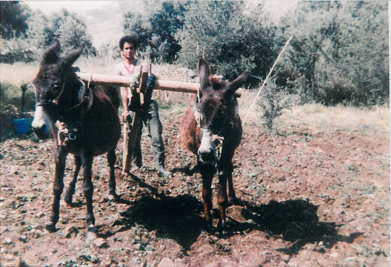 livestock_1