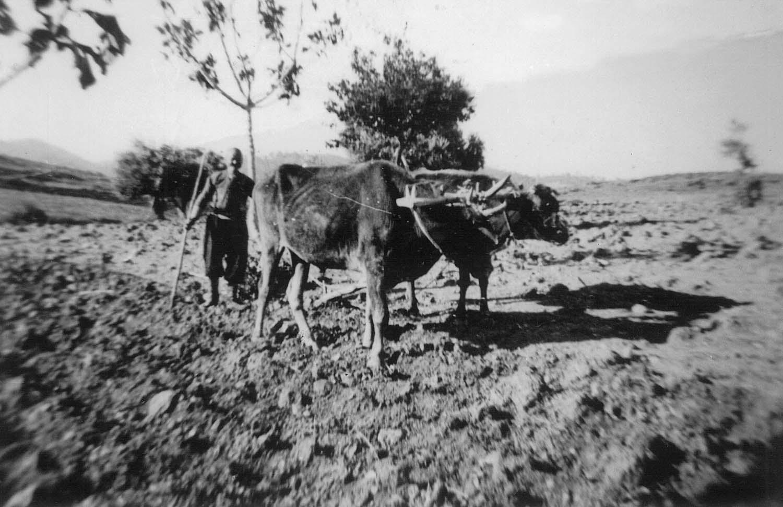 livestock_3